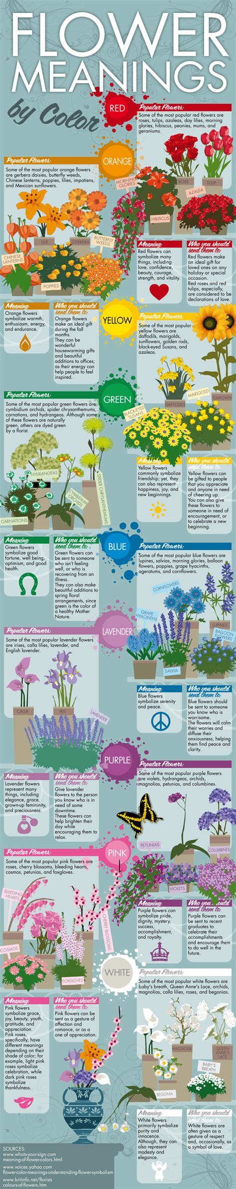 flower color meaning infographic flower meanings by color avas flowers