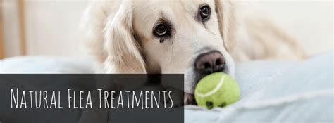 what is the best flea treatment for dogs best flea treatment for dogs pills drops shoos sprays