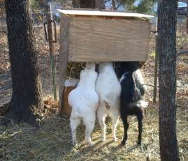 how to raise goats in your backyard farm or homestead