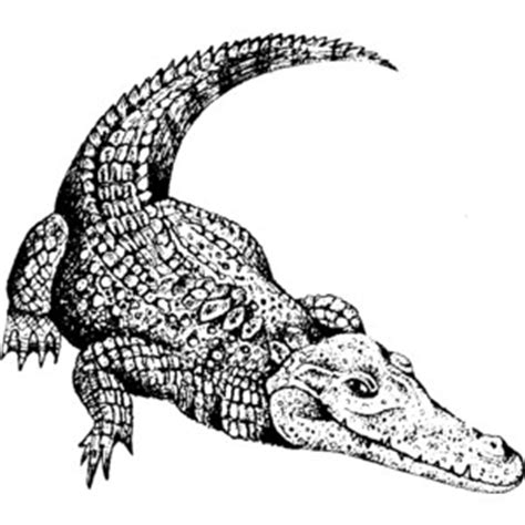 Black Master Crocodile crocodile black and white clipart
