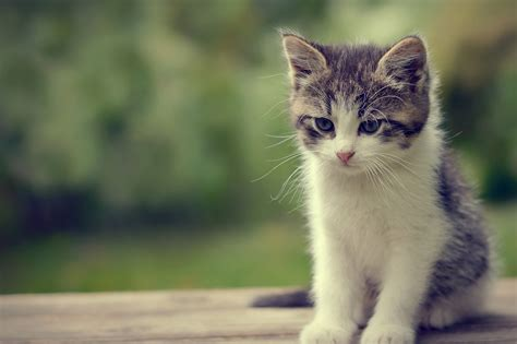 hd cat wallpapers cute cat   cat images claw