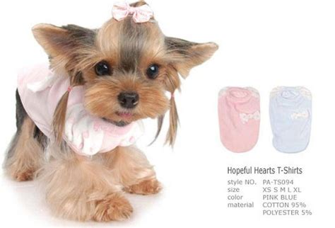 yorkie terrier clothes terrier clothes south africa photo