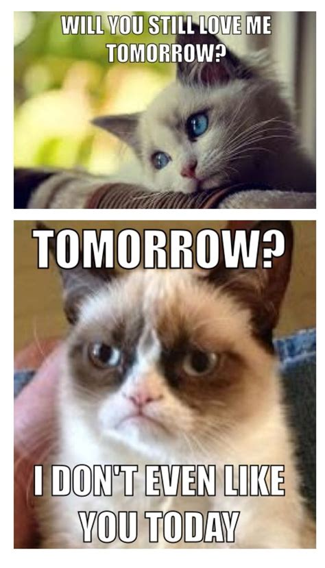 Grumpy Memes - best 25 sad cat meme ideas on pinterest grumpy cat