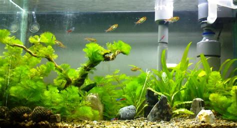 membuat lu aquascape sendiri cara membuat sendiri peralatan co2 taman air aquascape