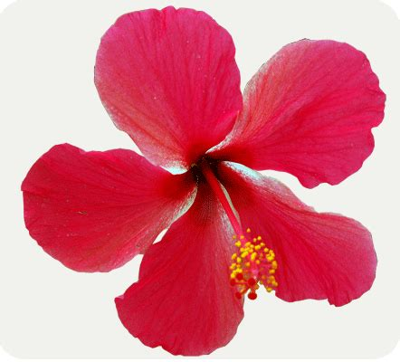 design bunga raya welcome to bb malaysia flower