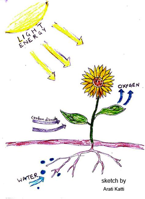 photosynthesis diagrams photosynthesis explained with a diagram