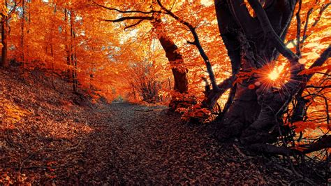 landscape fall seasons forest sunset nature