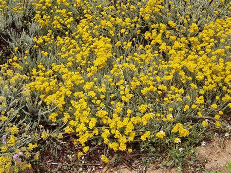 fiori primaverili nomi fiori gialli primaverili jd96 187 regardsdefemmes