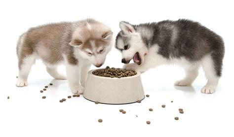best food for siberian husky puppy food for husky puppies