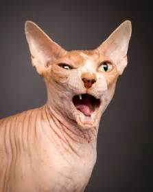 gallery for gt ugly cat pictures
