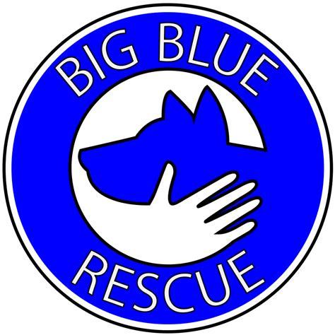 blue rescue kentucky area no kill pet rescue movement big blue rescue
