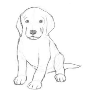 draw cute puppies  android  top apps