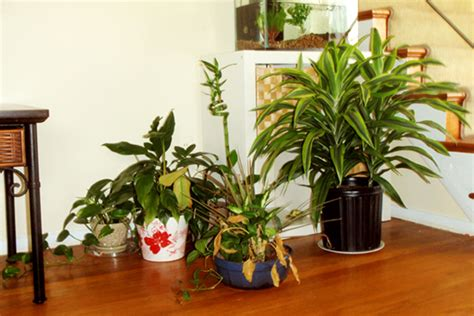 indoor fragrant plants these indoor house plants detoxify and cool your home