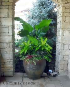 25 best ideas about tropical backyard landscaping on