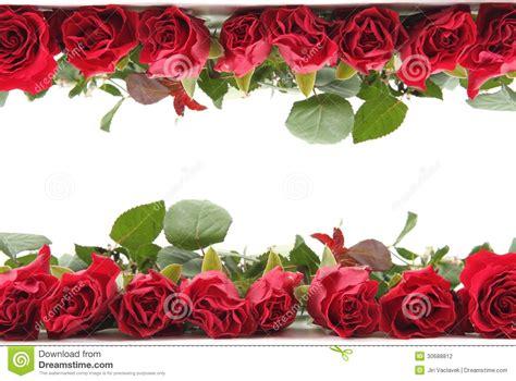 imagenes de rosas rojas frescas rosas rojas frescas como marco fotograf 237 a de archivo