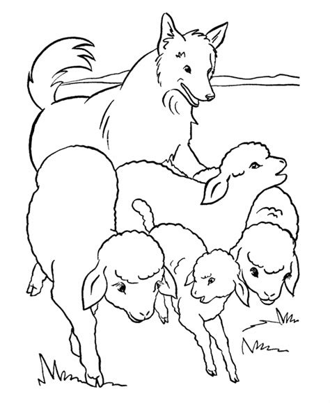 coloring pages of sheep dogs sheep coloring picture coloring home