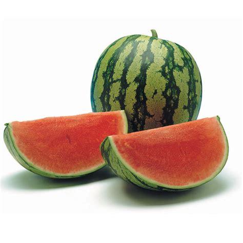 Bibit Buah Semangka semangka thailand tanpa biji bungahias net