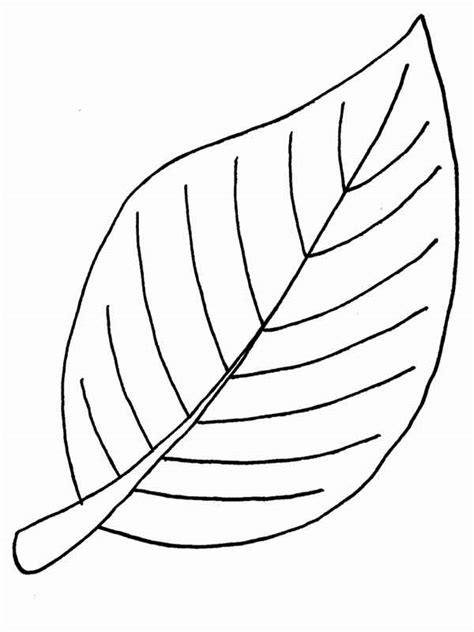 beech autumn leaf coloring page  print