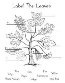 How Does Answer Garden Work 1000 Images About Leaves On Photosynthesis