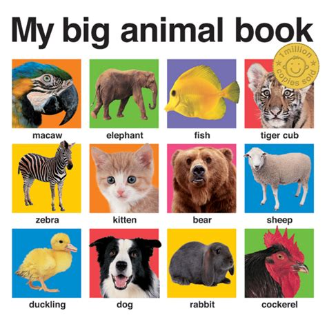 animal picture books my big animal book roger priddy macmillan