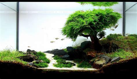 bonsai aquascape iwagumi bonsai romain lourme