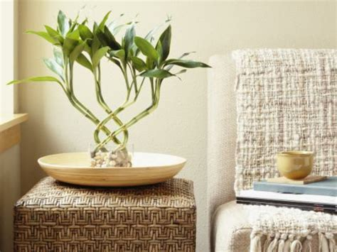 schlafzimmer pflanzen feng shui feng shui im arbeitszimmer seien sie noch effektiver
