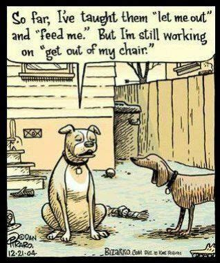 pet sitter dog walker funnies images