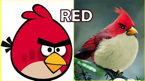 angry bid angry birds real all characters