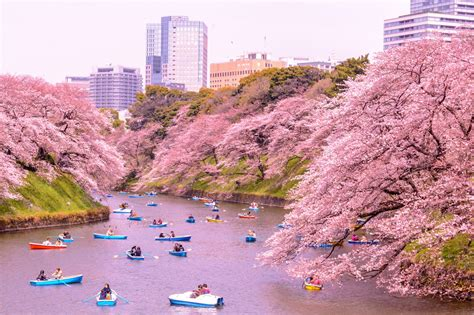 April Top top 10 things to do in japan in april japan travel guide
