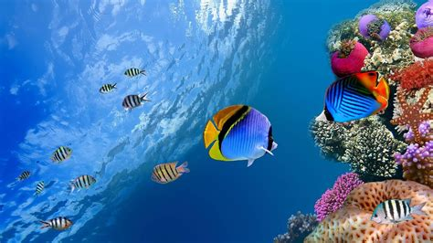 www fish live wallpaper fish live wallpaper android apps on play
