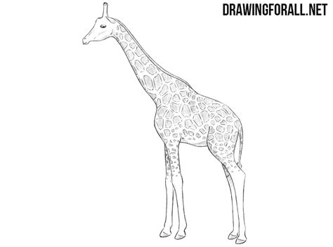 pattern giraffe drawing how to draw a giraffe drawingforall net