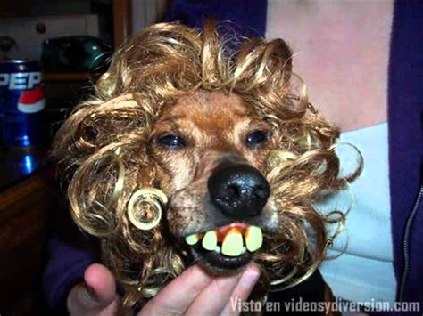imagenes de animales feos perros feos youtube