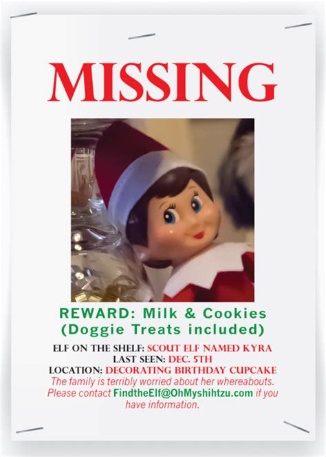 missing on the shelf oh shih tzu