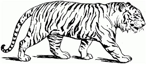 tiger coloring pages free printable free printable tiger coloring pages for kids