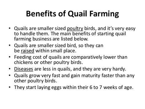 sle business plan for quail farming fish farming business in nigeria quail farming business