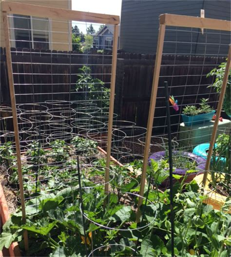 2ft Trellis Diy Squash Trellis S Garden Of Wonderment
