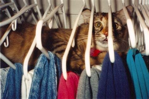 Cats Closet by Cat In Closet S Animal S Best Friend