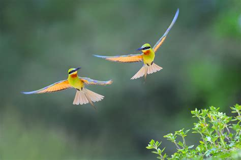 bee eater wallpapers first hd wallpapers bee eater full hd wallpaper and background image