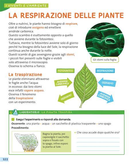 lade per piante da interno lade per la crescita delle piante a come a scuola insieme