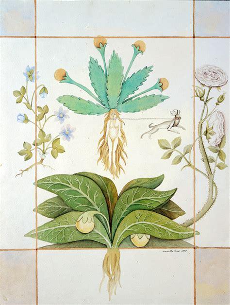 tavole botaniche tavole botaniche