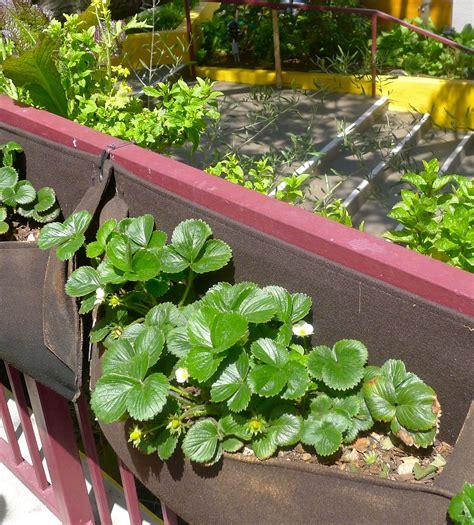 edible backyard plants edible gardens beyond the brochure