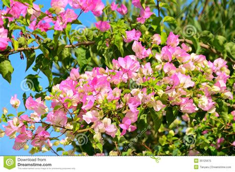 green shrub with pink flowers branch with pink flowers and green leaves horizontal