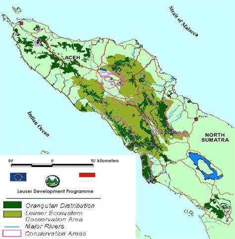 Youtuber Indonesia 004 orangutans