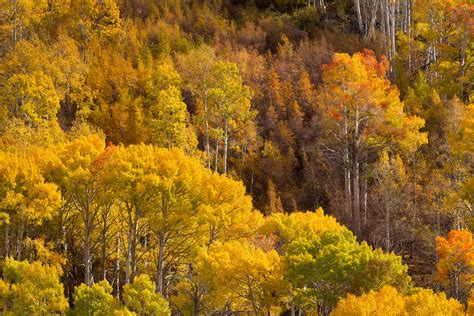 california fall color photographing fall colors in california s eastern