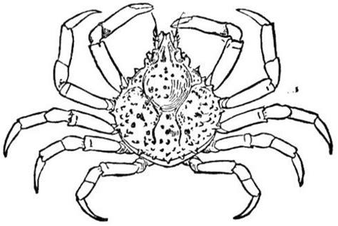 coloriage crabe araign 233 coloriages 224 imprimer gratuits