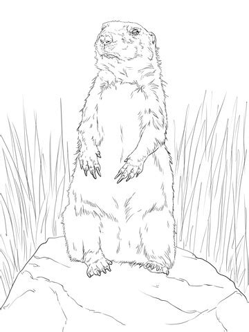 coloring pictures of prairie dogs coloring pages of a prairie dog freecoloring4u com