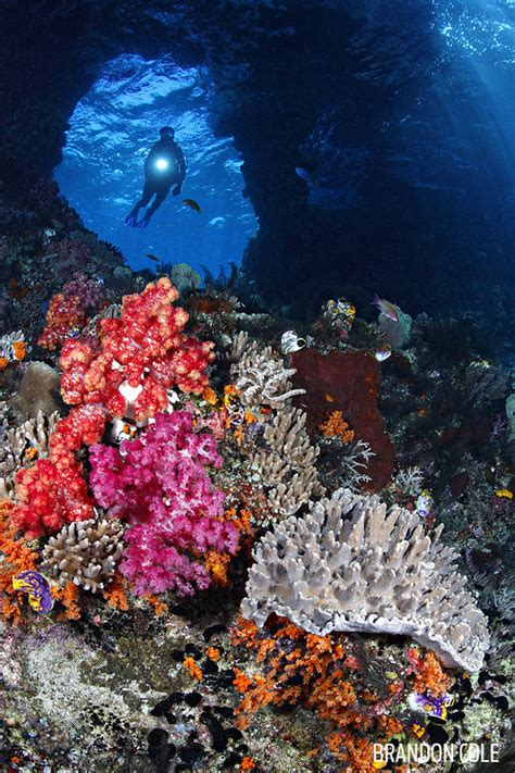 best diving locations in the world the world s best scuba diving locations scuba diving