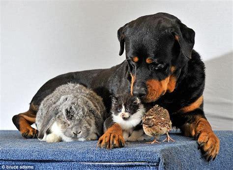 rottweiler puppy aggressive behavior 5 tips to minimize aggressive rottweiler puppy behavior shalisha alston linkedin