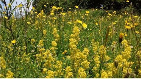 Larissa Flower Big bashing for butterflies leighton moss leighton moss the rspb community