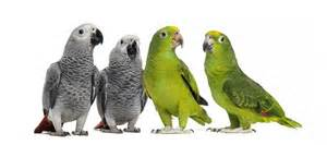 Types of Parrots ? Pet Birds Info: Article and Pictures ? Pet Yak